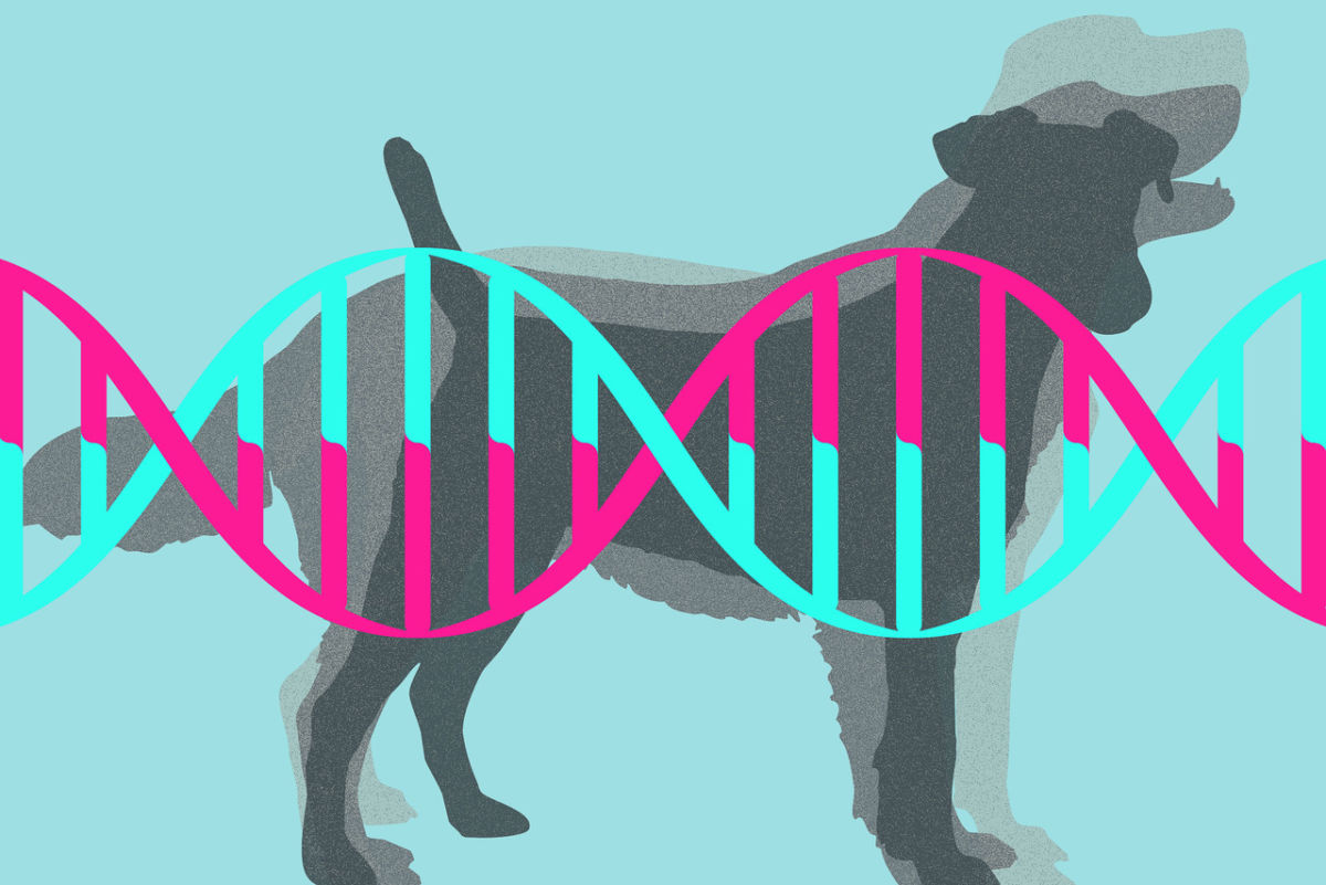 Genes that make wild animals our pets
